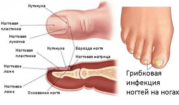 Таблетки внутрь для лечения грибка на ногтях