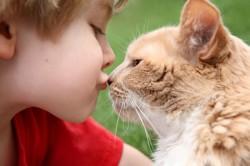 Контакт с животными - причина заражения грибком